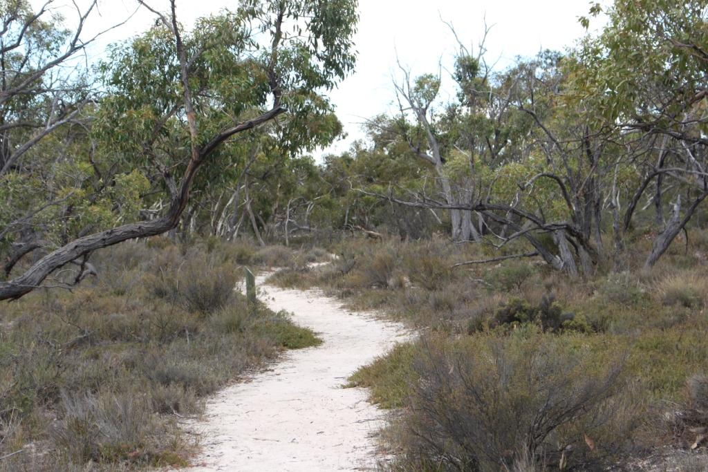 Stringbark walk